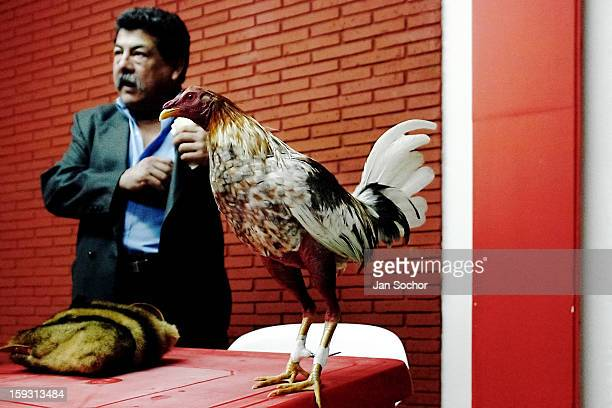 Colombian breeder of cocks takes bets on his cock before the beginning of the match in the arena of San Miguel Bogota Colombia on April 07 2006...