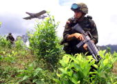 Colombian drug enforcement police patrol a coca field as a plane flies in to fumigate the fields 12 September near Barbacoas in the Narino province...