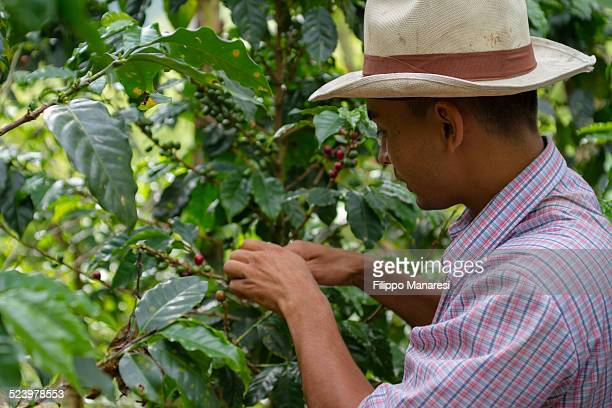 Colombian farmer