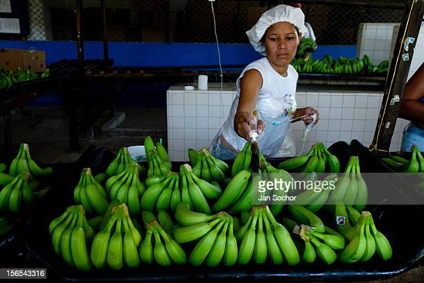 A colombian girl applies chemicals to bananas before packaging at a banana plantation on March 14 2006 in Aracataca Colombia Eighty percent of the...
