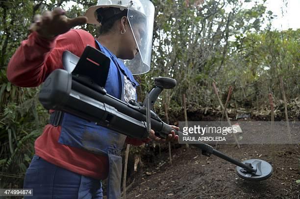 Colombian minesweeper Benilda Arango detects a landminer in a minefield laid by guerrillas in La Virgen Carmen de Viboral Municipality Antioquia...
