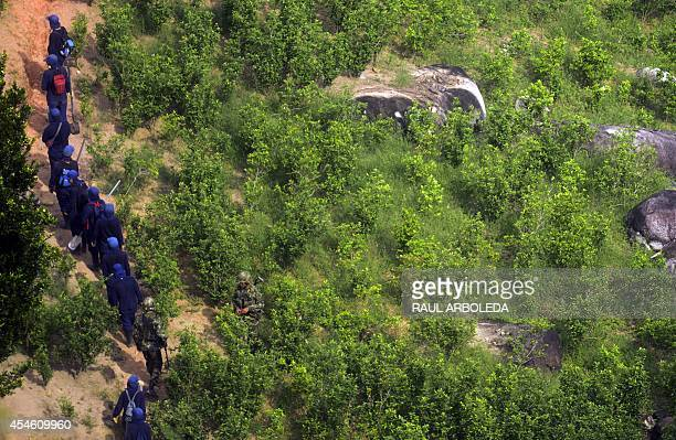Colombian peasants walks after working in eradication of coca plantations in the mountains of Yali municipality northeast of Medellin Antioquia...