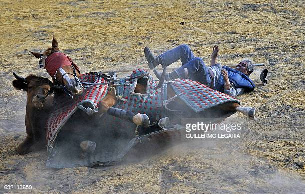 TOPSHOT Colombian picador Cayetano Romero is thrown from his horse by a bull during a bullfighting training session at the Mondoñedo's fighting bulls...
