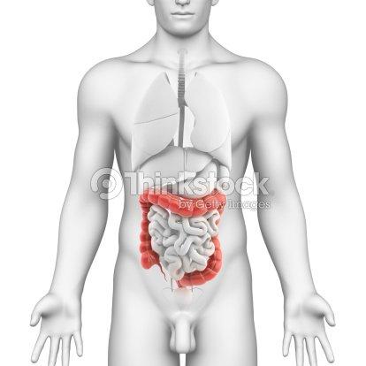 Colon Anatomía Del Sistema Digestivo Macho Foto de stock | Thinkstock