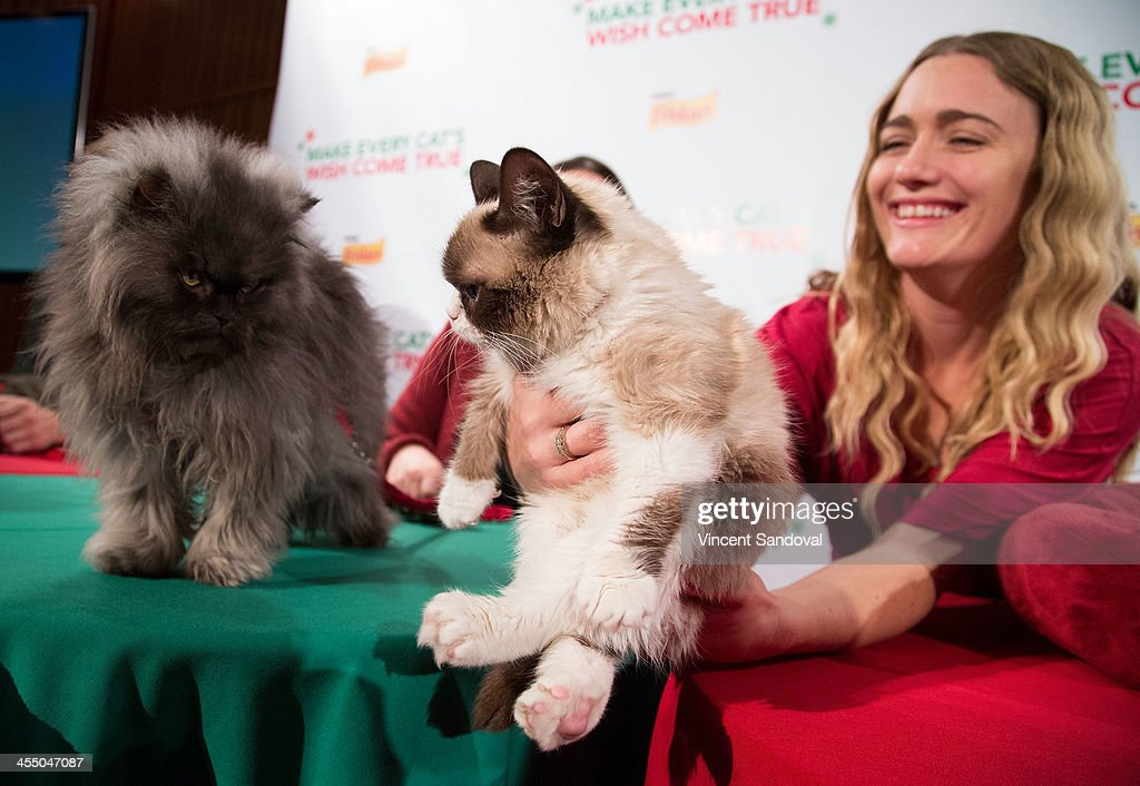 Colonel Meow Grumpy Cat and Tabatha Bundesen attend the Internet Cat Super Group Holiday Unveiling event at Capitol Records Tower on December 10 2013...