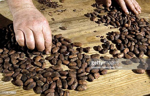 Colonial Williamsburg foodways interpreter and historic chocolate authority Jim Gay removes debris from cocoa beans before cooking