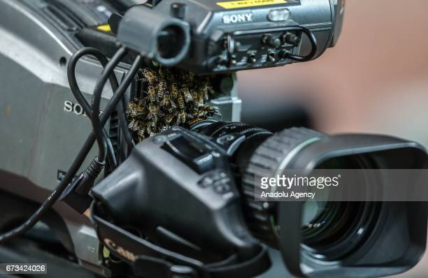 Colony of bees are seen on a publisher's camera before the Ziraat Turkish Cup semi final soccer match between Medipol Basaksehir and Fenerbahce at...