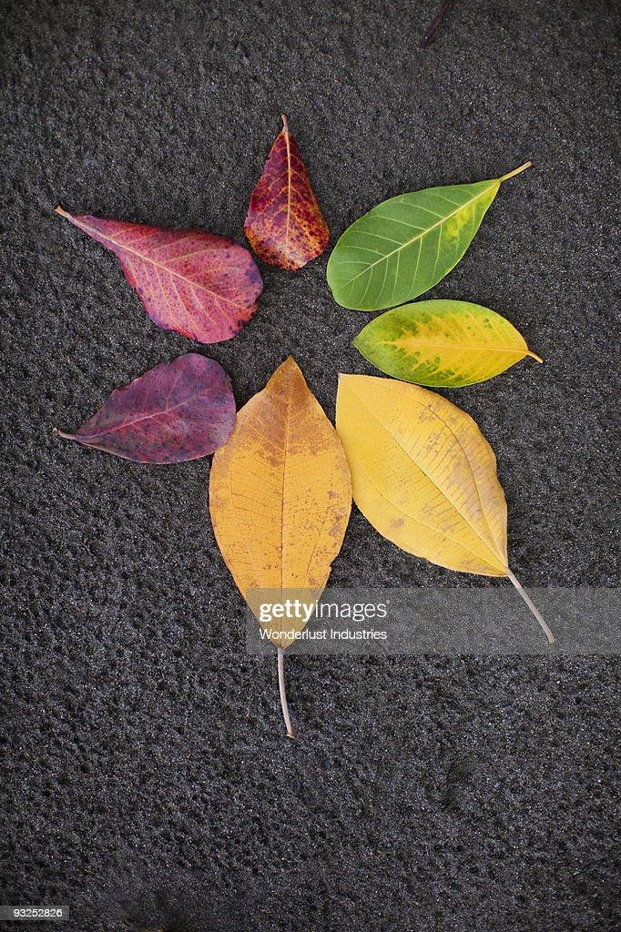 Color wheel of foliage