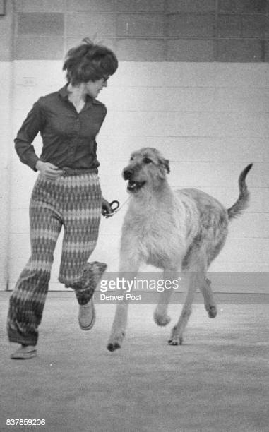 Colorado Kennel Club Dog Put Through Paces At ShowTrial Mrs Kathy Adorn ripple Creek Colo trots her Irish wolfhound during the competition at the...