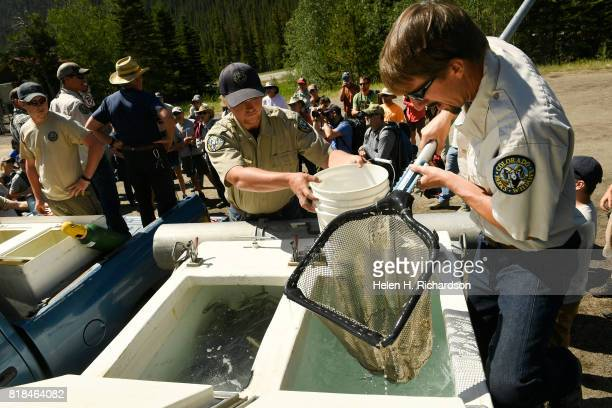 Colorado Parks Wildlife Hatchery technicians Dave Karr right and Kevin Schmidt transfer yearling Greenback Cutthroat trout from a truck into buckets...