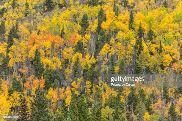 Colorado Rocky Mountain National Park Aspen