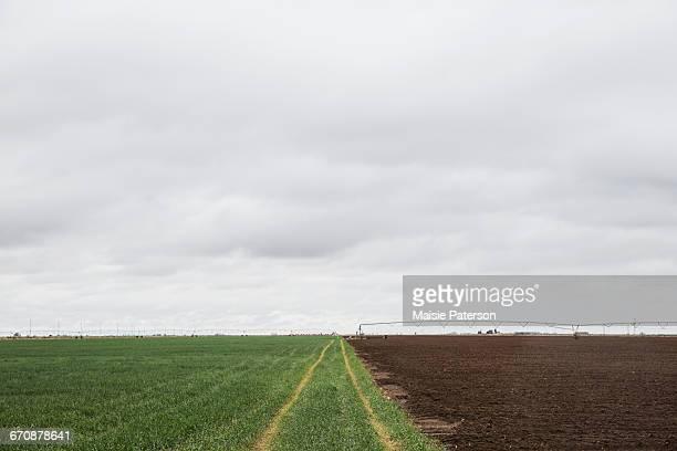 Colorado, Tire tracks in green field