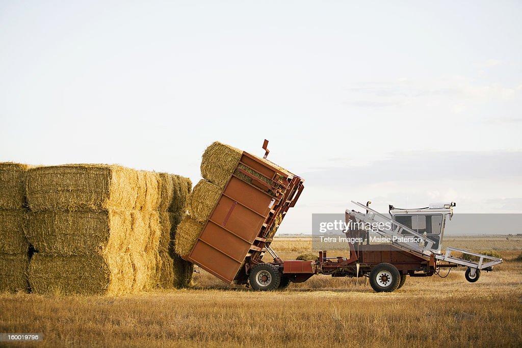 USA, Colorado, Tractor piling hay bales