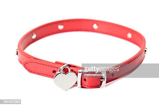 A colored dog collar with blank id tag