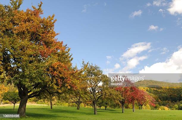 Bunte Obst Bäume im Herbst schwäbische Mountains