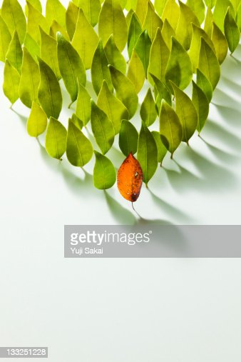 Colored leave in the front of  leaves : Bildbanksbilder