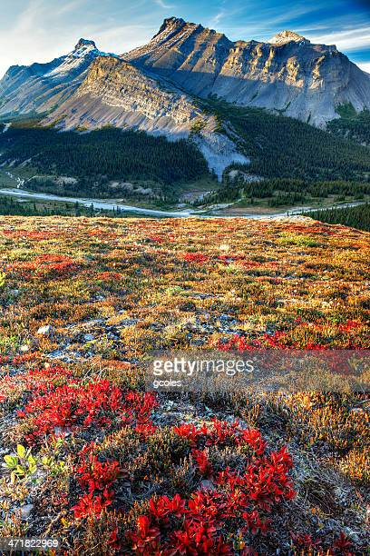 Colorful Alpine Landscape