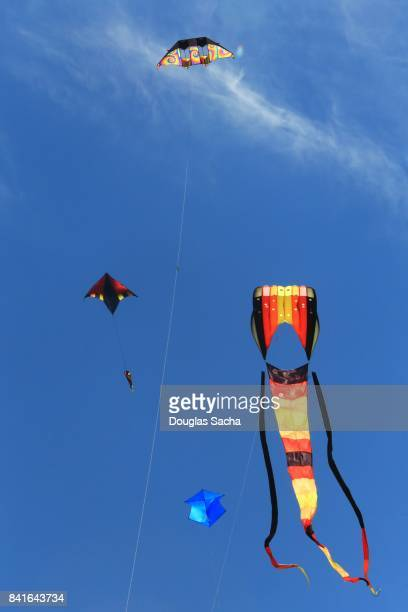 Colorful and different kinds of kites flying and on display