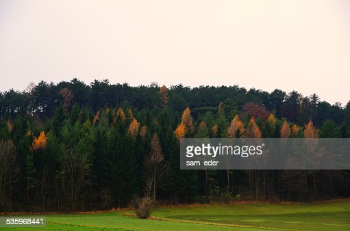 colorful autumn forest gray sky : Stock Photo