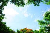 Tree, Woodland, Sky, Forest, Summer