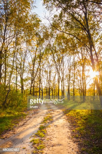 Colorful autumn trees in forest : Stock Photo