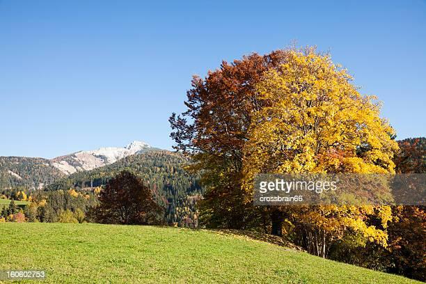 Bunte Herbst Bäume in den Bergen