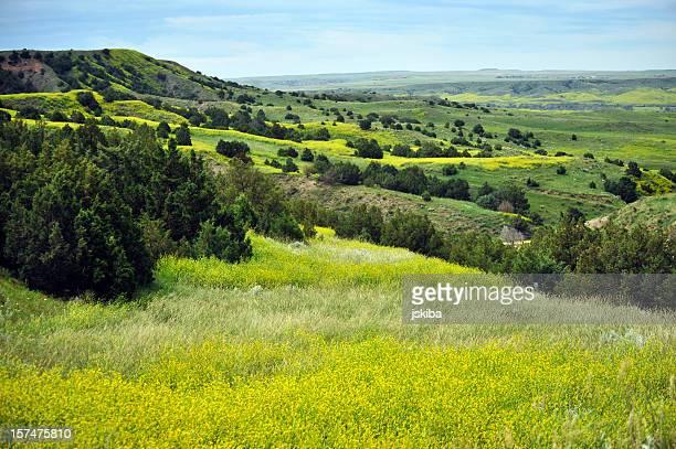 badlands paesaggio colorato in piena fioritura primaverile