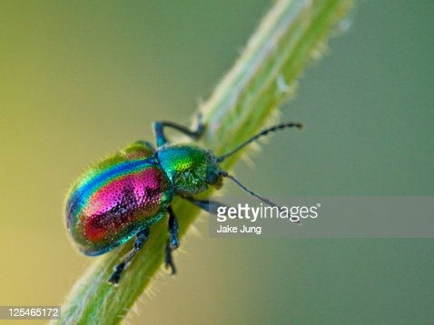 Colorful horned beetle - photo#6