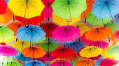 Colorful Bella Umbrellas on Display in Kings Park Western Australian during Spring Festival 2015