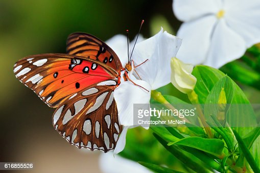 Colorful Butterfly : Stock Photo