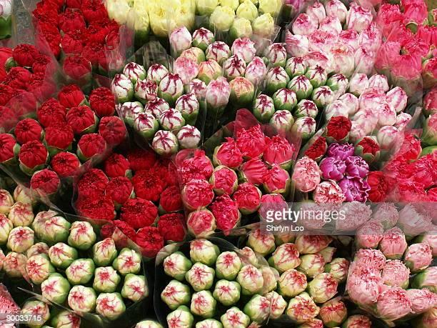 Colorful carnation flowers at flower market