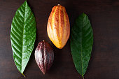 Colorful cocoa plant pods on dark wooden table above view