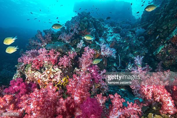 reefs parks thailand similan