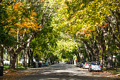 Colorful Countryside Residential Street in the fall with car and sunshine