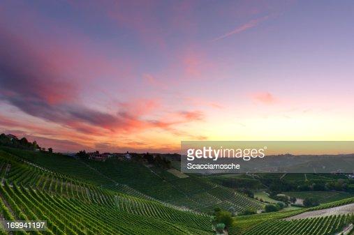 色のブドウ園の夜明け