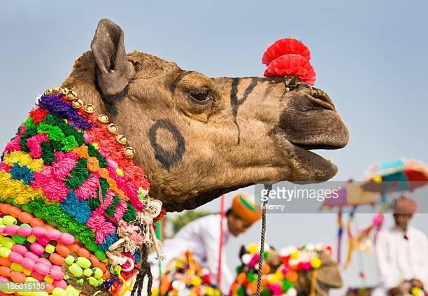 Colorful Decorated Camel Puskar Fair India
