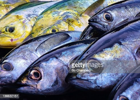 Colorful edible fish stock photo getty images for Types of edible fish