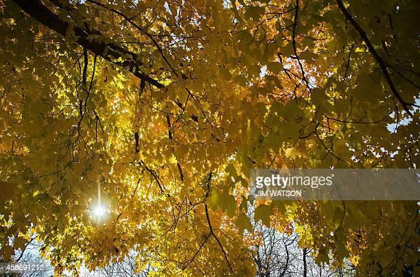 Colorful fall leaves at Dumbarton Oaks Gardens in the Georgetown neighborhood of Washington DC November 9 2014 AFP PHOTO / Jim WATSON