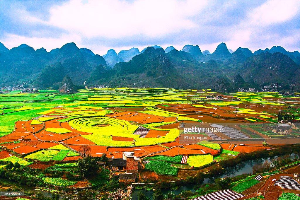 Colorful fields in Guzhou Xingyi