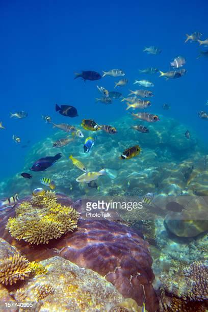 Poissons colorés et monde sous-marin