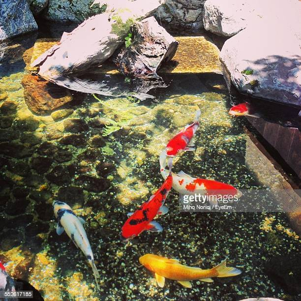 Colorful Fish In Water