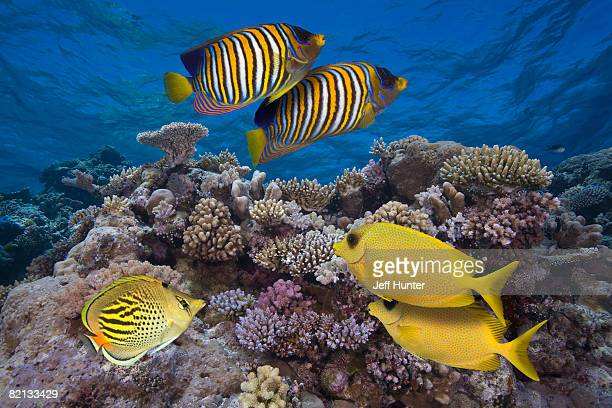 Colorful Fish on Great Barrier Reef, Australia