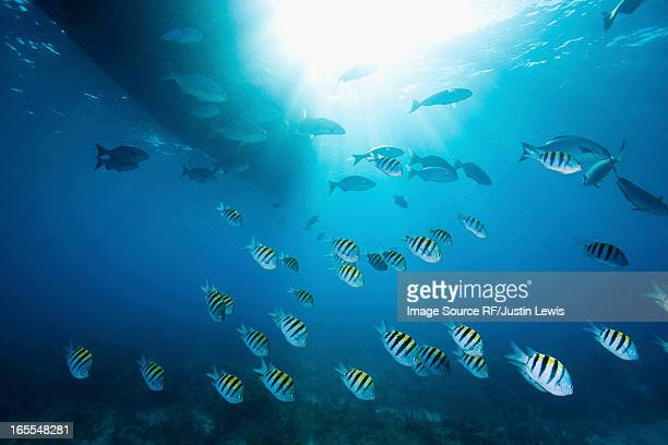 Colorful fish swimming in tropical water