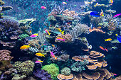 Colorful fishes and corals in the aquarium