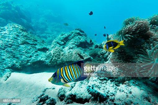 Colorful Fishes in Bora Bora, French Polynesia