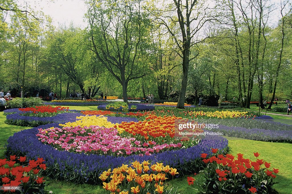Colorful flower beds of hyacinths, tulips and other bulbs in a formal garden, Keukenhof, Netherlands : Stock Photo