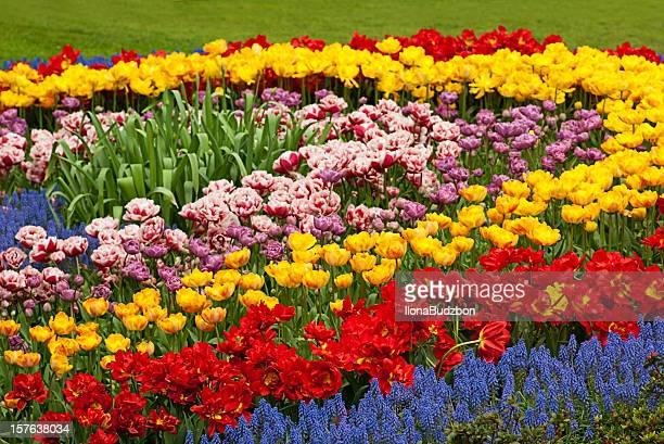 Colorful flower ber