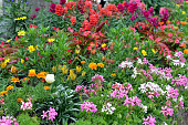 colorful flowerbed with summerplants, alps central france