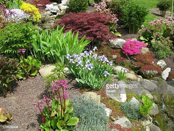 Colorful flowers and plants in the garden