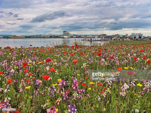 Colorful Flowers Blooming By Cardiff Bay Against Sky